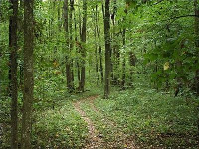 Teren forestier (PADURE)  de vanzare inscris in amenajamentul silvic