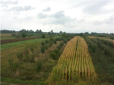 Pomicultura 155 pomi.Oar, 55 ari